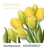 yellow tulip flowers on white... | Shutterstock .eps vector #1024543027
