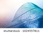 Stock photo transparent skeleton leaf with beautiful texture on a blue and pink background glass with shiny 1024557811
