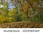 low view of a forest path... | Shutterstock . vector #1024585369