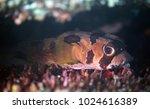 beautiful porcupine big fish... | Shutterstock . vector #1024616389