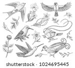 small hummingbird  birds of... | Shutterstock .eps vector #1024695445