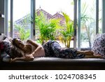 beautiful brunette woman in...   Shutterstock . vector #1024708345