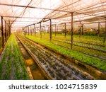 blurred image vegetable garden... | Shutterstock . vector #1024715839