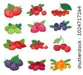 berry vector berrying mix of... | Shutterstock .eps vector #1024717264