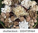 various raw mushroom types  ... | Shutterstock . vector #1024739464