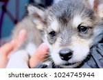 Stock photo beauty little puppy 1024745944