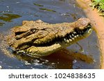 head of saltwater crocodile ... | Shutterstock . vector #1024838635