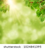 the sun shines in the young... | Shutterstock . vector #1024841395