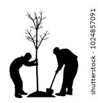 Two Men Planting A Tree. In Ep...