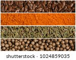 collage of various spice seeds. ... | Shutterstock . vector #1024859035