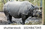rhinoceros meal time | Shutterstock . vector #1024867345