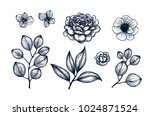 hand drawn herb and flower set. ... | Shutterstock .eps vector #1024871524