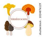 mushroom set   bolete  reishi ... | Shutterstock . vector #1024876129