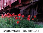old trains with poppies in...