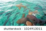 Small photo of Nurse Sharks in Shark Ray Alley, Belize.
