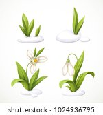snowdrop making the snow... | Shutterstock .eps vector #1024936795