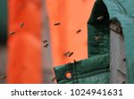 a honey bee is any member of... | Shutterstock . vector #1024941631