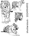vector drawings sketches... | Shutterstock .eps vector #1024994995