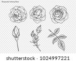 rose vector set by hand drawing | Shutterstock .eps vector #1024997221