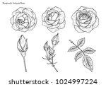 rose vector set by hand drawing.... | Shutterstock .eps vector #1024997224