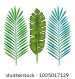 tropical and exotic palms leafs | Shutterstock .eps vector #1025017129