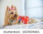 yorkshire terrier puppy | Shutterstock . vector #1025034601