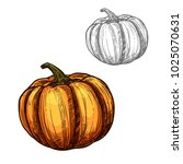pumpkin vegetable sketch icon.... | Shutterstock .eps vector #1025070631