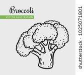 broccoli  vector illustration.... | Shutterstock .eps vector #1025071801