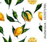 watercolor citron. hand drawn... | Shutterstock . vector #1025071981