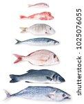 fresh fish collage on white...   Shutterstock . vector #1025076055