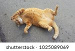 Stock photo the cat is lying on the ground 1025089069
