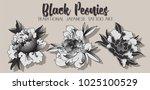 vector black peonies... | Shutterstock .eps vector #1025100529