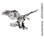 flying eagle vector... | Shutterstock .eps vector #1025103841