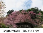 pink flora blooming on the roof ... | Shutterstock . vector #1025111725