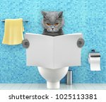 Angry Cat Sitting On A Toilet...