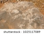 the fossils of rajasaurus
