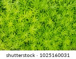 close up of green grass in the... | Shutterstock . vector #1025160031
