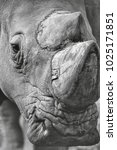 Small photo of Endangered species. A rhino portrait in monochrome.