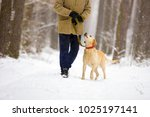 Man With Dog On A Leash Walks...