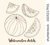 sketch of watermelon  whole and ... | Shutterstock .eps vector #1025217931