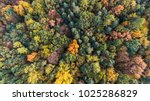 Small photo of Autumn forest aerial drone view