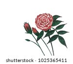 drawing rose flower with pen ... | Shutterstock . vector #1025365411