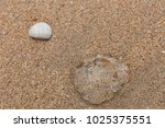 jellyfish on the beach.  | Shutterstock . vector #1025375551