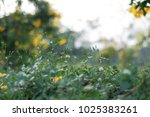 grassland close up background. | Shutterstock . vector #1025383261