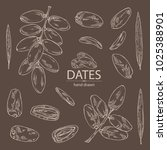 collection of date fruit ... | Shutterstock .eps vector #1025388901