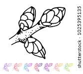 vector kidney bud black pattern ... | Shutterstock .eps vector #1025395135