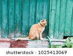 portrait of red cat | Shutterstock . vector #1025413069
