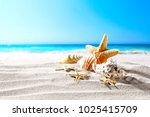 beautiful sea shells on the... | Shutterstock . vector #1025415709