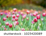 background of blooming colorful ... | Shutterstock . vector #1025420089