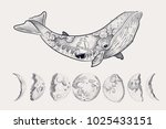 whale surreal tattoo. steering... | Shutterstock .eps vector #1025433151